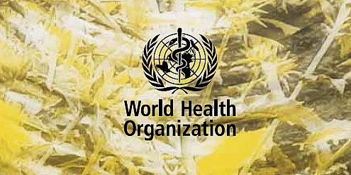 the world health organizations role in fighting The united nations is an international organization designed to make the enforcement of international law, security, and human rights economic development and social progress easier for countries around the world.