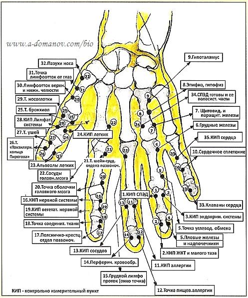 точечный массаж ладони руки