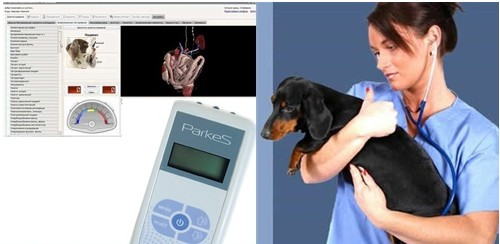 «Паркес-Д» - Исследования на животных (на крысах, на собаках, на овцах), физиотерапевтические приборы для животных